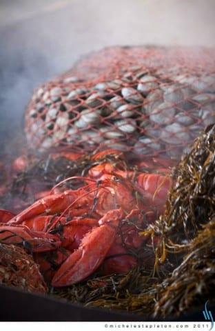 Michele Stapleton | Maine Lobster Bake