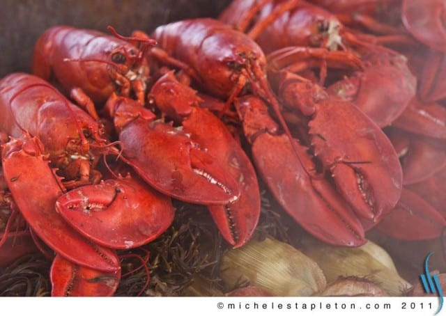 Michele Stapleton | Maine Lobster Bake