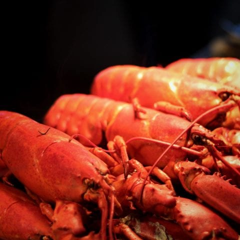 lobsters close up